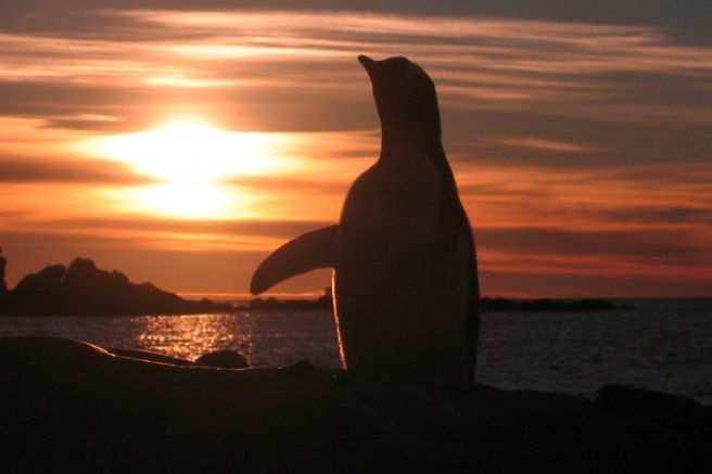 Снимка: Български антарктически институт